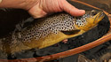 Upland trout
